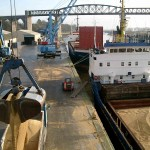grain bulk cargo martin butterly shipping agent